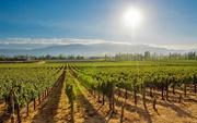 Best Wine Tours Napa Valley