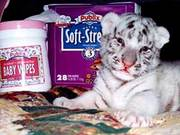 LICENSED WHITE TIGER CUB